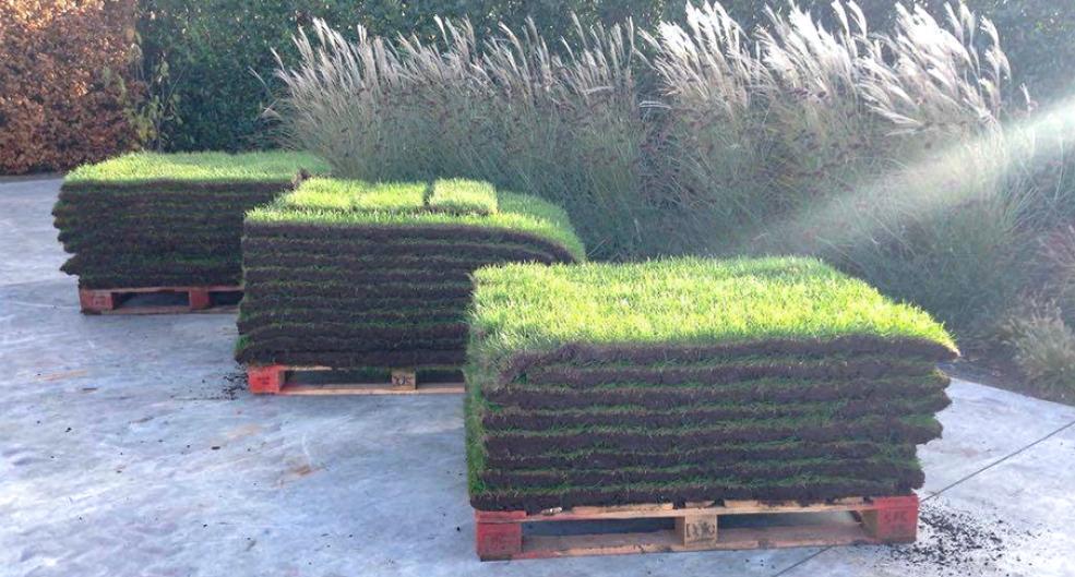 Onze grassoorten